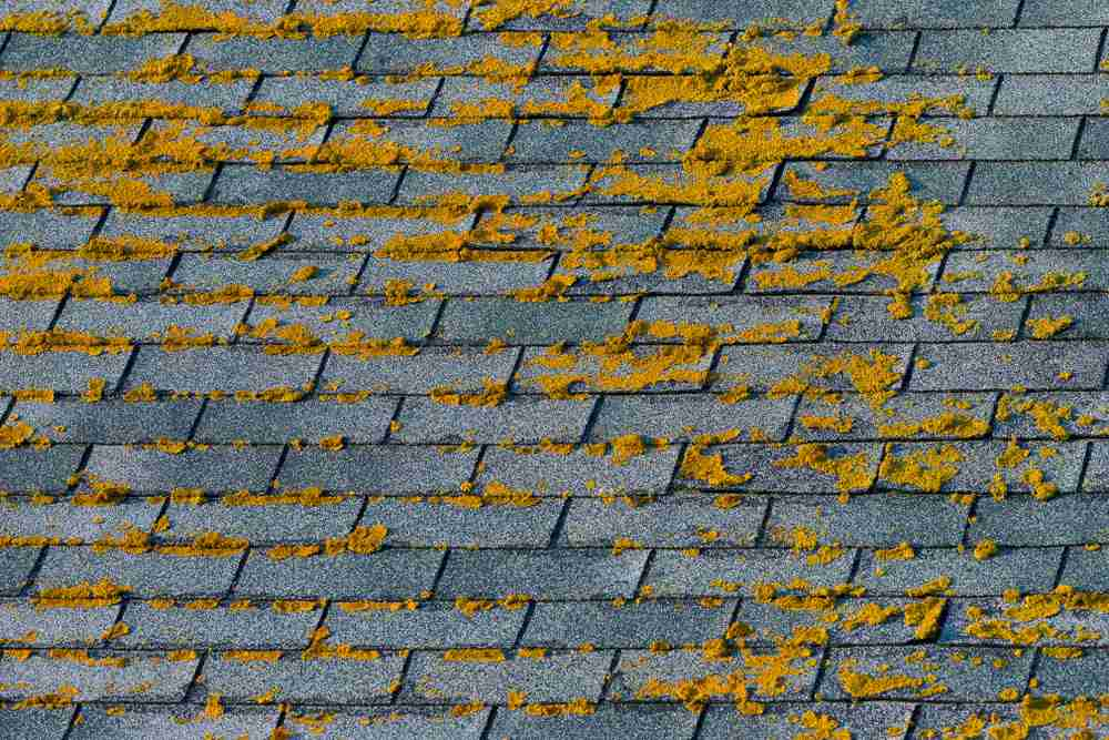 Got Roof Algae? Dos and Don'ts of Removal